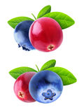 Isolated cranberry and blueberry. Isolated berries. Two images of cranberry and blueberry fruits with leaves isolated on white background with clipping path Royalty Free Stock Image