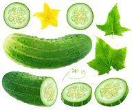 Isolated cucumber collection stock photos