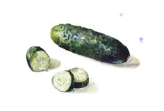 Isolated cucumber in watercolors on white background Stock Photos