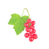 Isolated currant Royalty Free Stock Photos