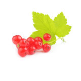 Isolated currant Royalty Free Stock Images
