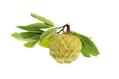 Isolated custard sugar apple. Vietnam Royalty Free Stock Images