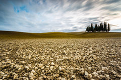 Isolated cypresses in Val D'Orcia Royalty Free Stock Images
