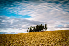 Isolated cypresses in Val D`Orcia, Tuscany Royalty Free Stock Photography
