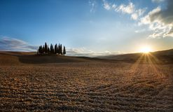 Typical landscape of Tuscany. Isolated cypresses in Val D`Orcia, a wonderful valley in the province of Siena - Tuscany Italy Royalty Free Stock Photography