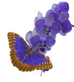 Isolated dark blue butterfly and orchid blossom cluster Stock Photo