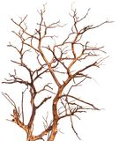Isolated dead tree branches royalty free stock image