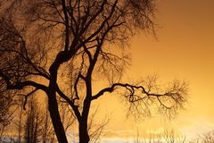 Tree with Sunset Silhouette royalty free stock image
