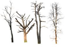 Isolated dead trees on the white background. royalty free stock photos
