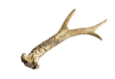Isolated deer horn Stock Photo