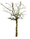 Isolated died tree by flood. Isolated tree dead by flood Royalty Free Stock Photography