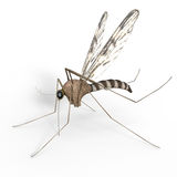Isolated Digital Mosquito Royalty Free Stock Images