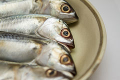 Isolated dish of fresh mackerel Royalty Free Stock Images