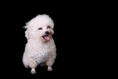 Isolated dog Stock Photos
