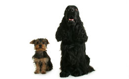 Isolated dogs Stock Photos