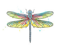 Isolated dragonfly watercolor drawing Royalty Free Stock Images