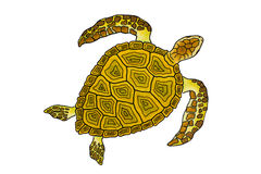 Isolated Drawing Of A Sea Turtle Stock Photography