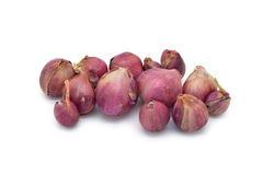 Isolated dried shallot Stock Images