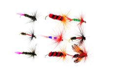 Isolated dry fishing flies Royalty Free Stock Image
