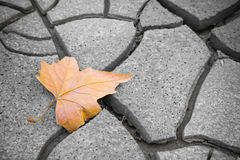 Isolated dry leaf on dry ground. Picture useful to express the concepts of: life, melancholy Stock Image