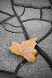 Isolated dry leaf on dry ground Stock Photos
