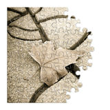 Isolated dry leaf on the ground - concept image in puzzle shape Royalty Free Stock Images