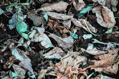 Isolated dry plant leaves on the ground surface stock image