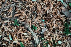 Isolated dry plant leaves on the ground surface royalty free stock images
