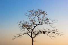 Isolated dry tree with honey comb Royalty Free Stock Photos