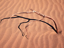 Isolated Dry Twig in the Sand. Death valley is one of the hottest regions on Earth with temperatures soaring past 135 degrees fahrenheit royalty free stock images