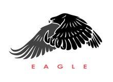 Isolated eagle Stock Photos