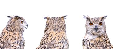 Isolated eagle Owl. Stock Photos