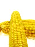 Isolated ear of corn Royalty Free Stock Photography