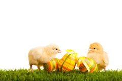 Isolated easter eggs and chickens on green grass Stock Photo