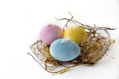 Isolated easter eggs in a nest on light background. Stock Photos