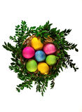 Isolated easter eggs in the wicker basket with green branches. top view Royalty Free Stock Image