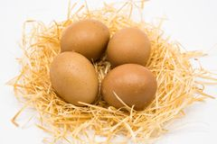 Isolated four eggs with nest royalty free stock photography