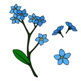 A set of blue flowers forget-me-nots. vector illustration