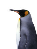 Isolated emperor penguin with clipping path Royalty Free Stock Photography