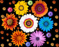 Isolated Exotic Flowers Stock Photos
