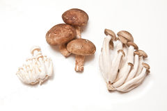 Isolated exotic mushrooms Royalty Free Stock Images