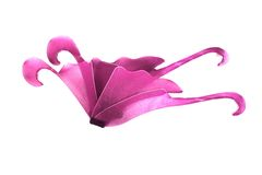 Isolated Fairy Wings royalty free stock image