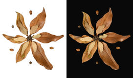 Isolated fall leaves decoration in flower shape Royalty Free Stock Image