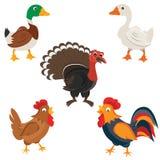 Isolated Farm birds in cartoon style. Vector illustration Stock Image