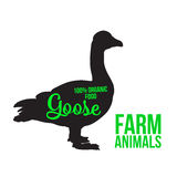 Isolated farm goose on a white background. Black goose with lettering, poultry, vector illustration sketch, farm feathered animal, one color and the beautiful Royalty Free Stock Images
