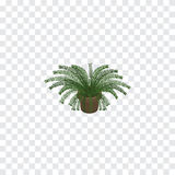 Isolated Fern Isometric. Plant Vector Element Can Be Used For Fern, Plant, Pot Design Concept. Royalty Free Stock Photography