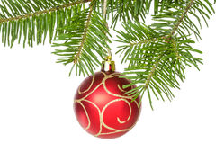 Isolated fir branch with a red bauble Royalty Free Stock Photo