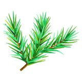 ISOLATED FIR BRANCH ON WHITE BACKGROUND. WINTER HOLYDAY. MERRY CHRISTMAS TEMPLATE. VECTOR ILLUSTRATION. PRESENT WALLPAPER. FUNNY ABSTARCT BACKGROUND Royalty Free Stock Photos