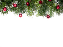 Isolated Fir branches Stock Images