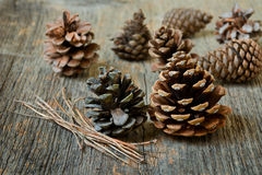 Isolated fir cones Royalty Free Stock Image